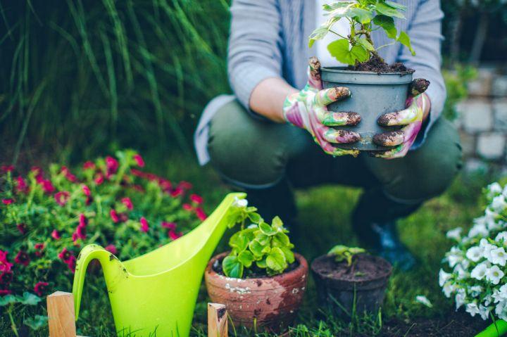 proud-gardener
